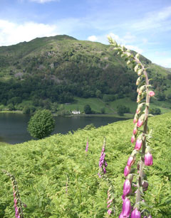 Nab Cottage in Rydal Water